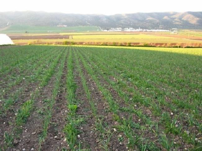 Extremadura crece a paso firme en superficie destinada a agricultura ecológica