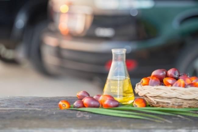La cara B del aceite de palma