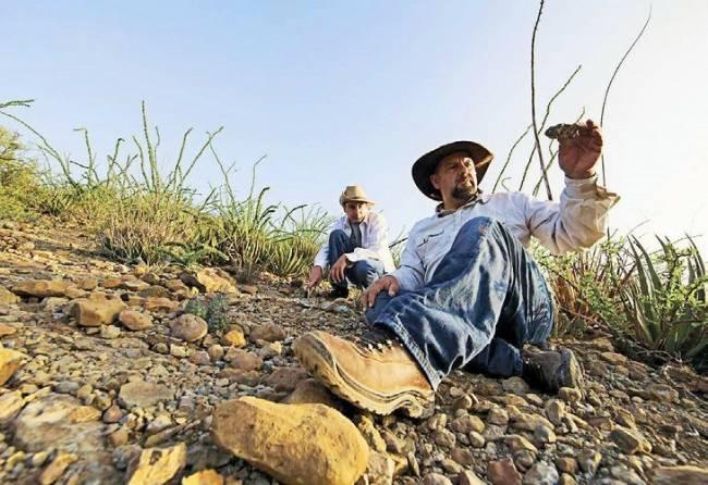 Descubren nueva especie de dinosaurio acorazado en Coahuila