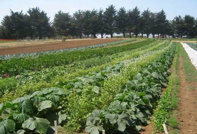 El sector de la agricultura ecológica da empleo a más de 42.000 personas en Andalucía