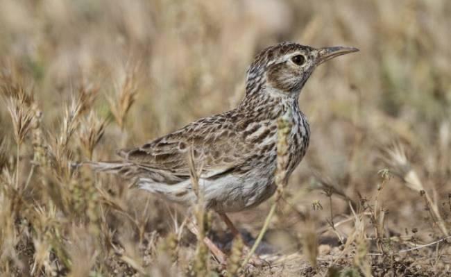 Unas jornadas en Medinaceli abordarán las posibilidades del turismo ornitológico en Soria
