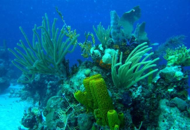 El cambio climático modifica la composición de los arrecifes