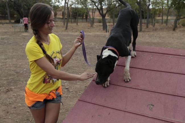 El Alcalde de Palma de Mallorca pide reducir los tiempos de espera en centros de acogida de animales