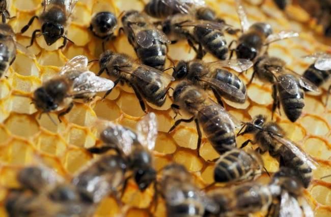 Los plaguicidas tóxicos para las abejas que Europa bendecirá