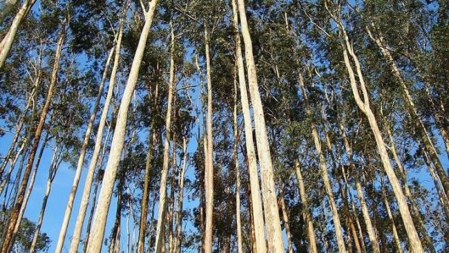 Argentina: Los seguros automotores financiarán la implantación de bosques