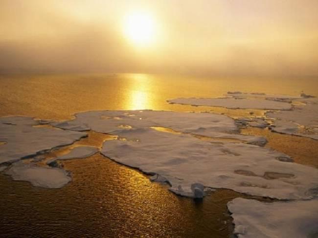 Éxodo a la vista de cientos de especies marinas por el calentamiento