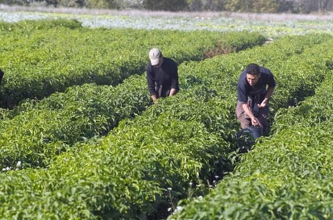 Navarra, crece, crece, y crece en superficie agraria ecológica