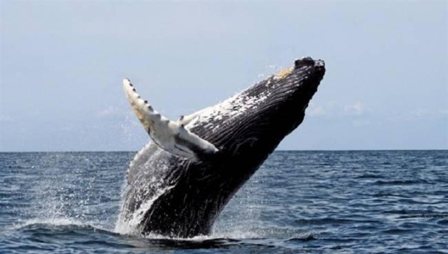 Descubren que los mares en latitudes altas producen más especies que en los trópicos