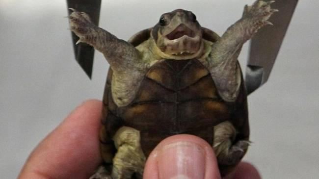 México: Descubren una nueva especie de tortuga en una zona turística