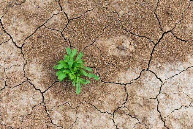 Identifican una posible asociación entre resistencia antimicrobiana y cambio climático