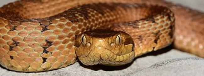 Serpientes en peligro