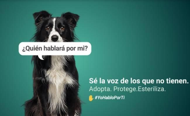 Formación sobre cuidado animal dentro de la Campaña ¿Quién hablará por mí?