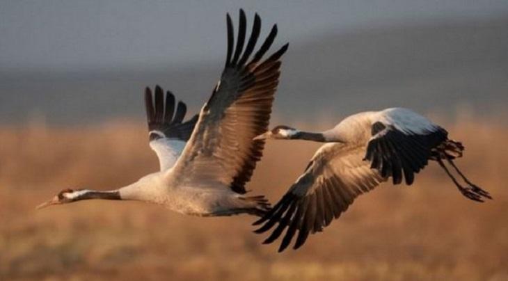 Monfragüe congregará actividades por el Día de las Aves Migratorias