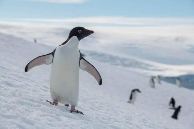 Unidos Podemos exige un santuario marino en la Antártida
