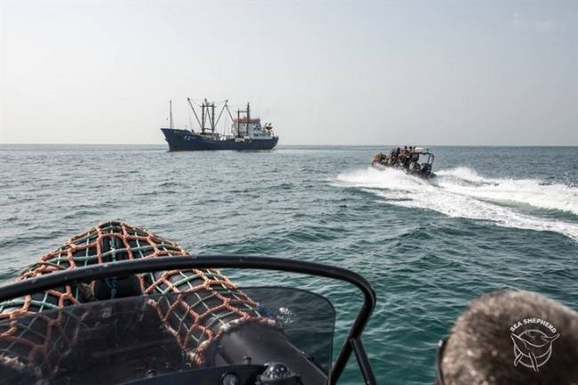 Sea Shepherd pide que EE UU prohíba las importaciones de pescado procedentes de empresas pesqueras de Nueva Zelanda que están llevando a los delfines de la extinción