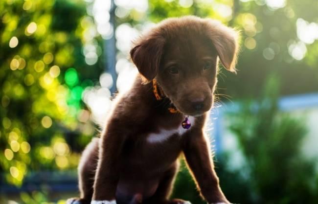 Denuncian aumento de anuncios ilegales de perros como 'regalo' navideño