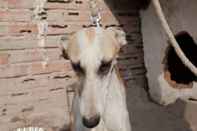 ¿Qué pasa con los animales abandonados en la Cañada Real?