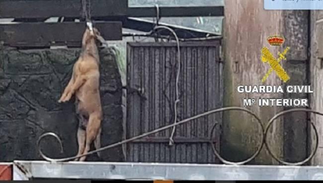Una mujer ahorca a su perro en Fisterra