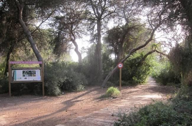 València instala nuevos paneles en itinerarios del bosque de la Devesa