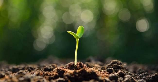 Los cinco mandamientos ambientales que todos los territorios deberían implantar