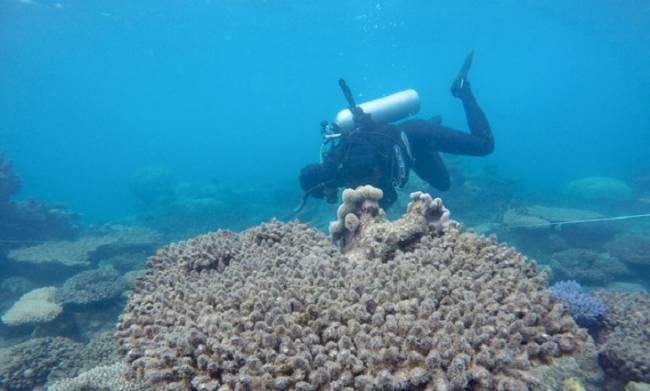 Greenpeace insta a vetar las prospecciones petroleras al norte de Brasil tras el hallazgo de un arrecife de coral