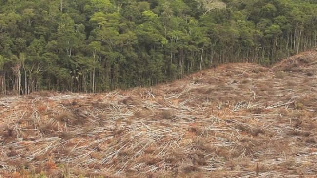 Ecologistas organiza hoy una 'performance' en Callao para alertar sobre los efectos del biodiésel de palma