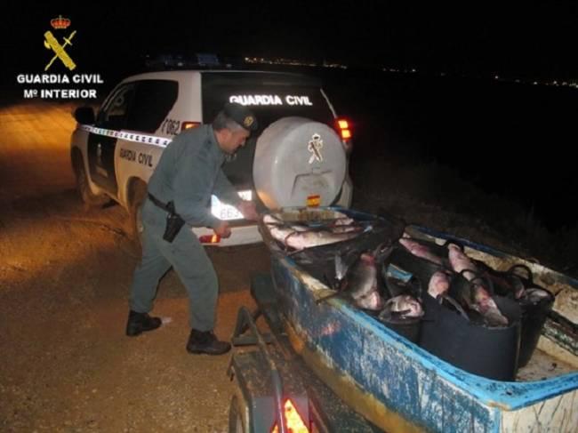 Guardia Civil sorprende a un presunto furtivo con una barca repleta de pescado en el paraje Marismas del Odiel