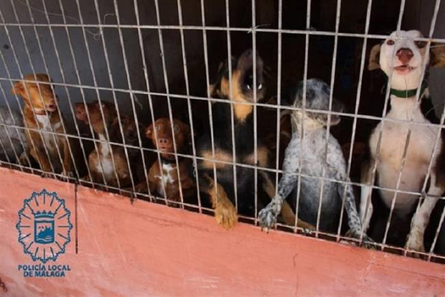 Terrorífica residencia canina en Málaga