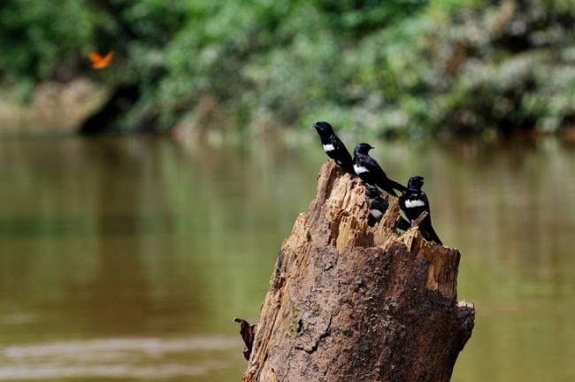 España arrancará una Estrategia Integral para frenar la pérdida de biodiversidad en breve