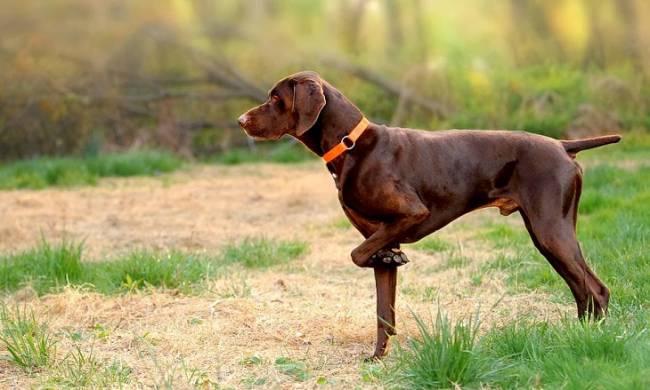 Los cazadores sacan pecho sobre el trato a los perros y con '0' autocritica