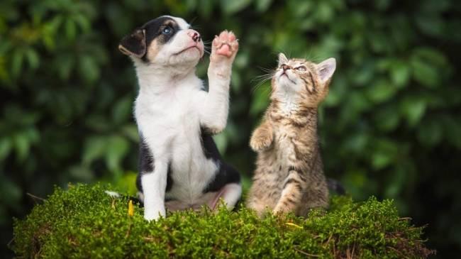 Ley Marco de Bienestar de Animales de Compañía