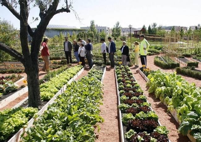 El Ayuntamiento de Pamplona propone una parcela de más de 2.000 m2 junto a la Biblioteca General como huerto ecológico