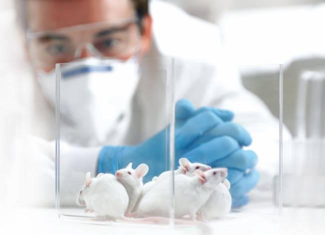 The Body Shop y Cruelty Free International llevan a la ONU 8,3 millones de firmas contra la experimentación en animales