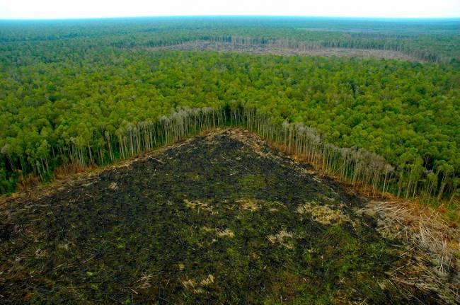 Cabify cubre sus emisiones de CO2 combatiendo la deforestación de la selva amazónica