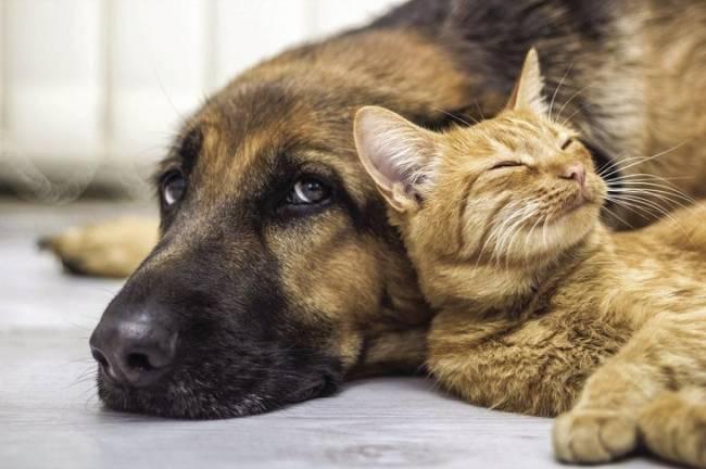 La Comunidad de Murcia invierte 5.000 euros en una campaña de adopción de perros y gatos abandonados