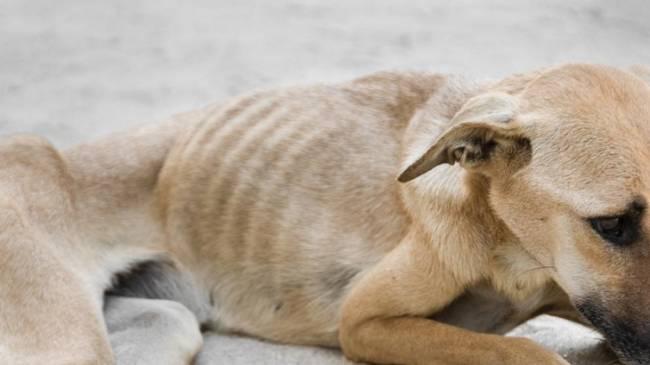 Decretado el ingreso en prisión de un hombre que apedreó a un perro hasta la muerte en Mérida delante de su hijo menor