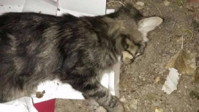 Investigan la muerte de dos gatos por