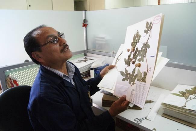 Herbario Nacional de México, nuestra memoria verde