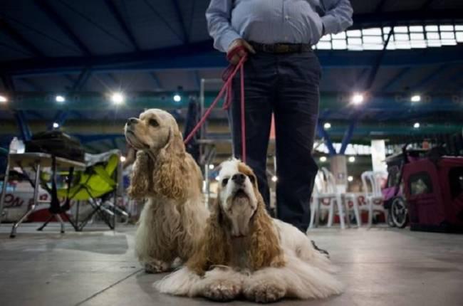 Arion renueva su colaboración con el salón Mi Mascota y realizará actividades familiares junto a animales