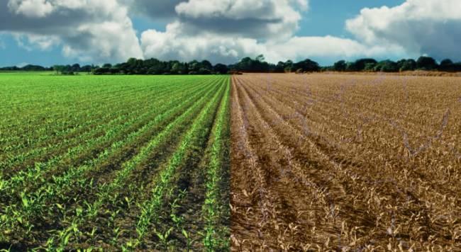 7 ejemplos de malas prácticas agrícolas que afectan al cambio climático