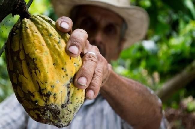 La iniciativa Cocoa Life en Brasil ayudará a combatir el cambio climático y garantizar un suministro sistenible de cacao