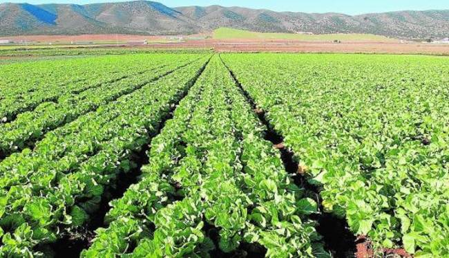 Nuevo pago a la agricultura ecológica y agroambiental andaluza de la campaña 2018