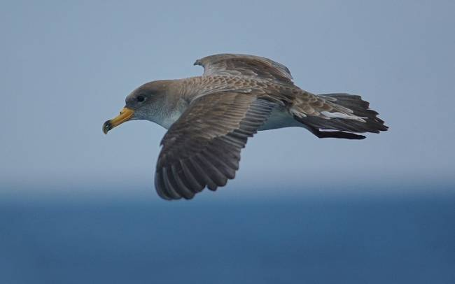 SEO/BirdLife tilda de
