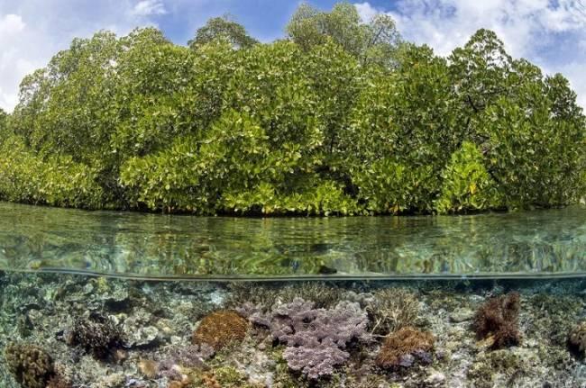 Se puede y se deben proteger los arrecifes de coral