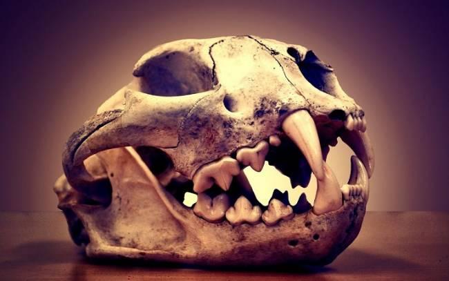 El comercio de animales salvajes fue común en la antigua Mesoamérica