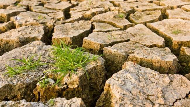 WWF considera que la lucha contra el cambio climático solo será posible con apoyo ciudadano