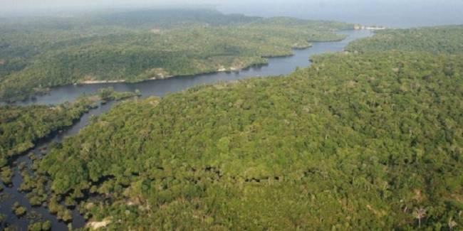 Siete países sudamericanos debaten sobre la conservación de la Amazonía