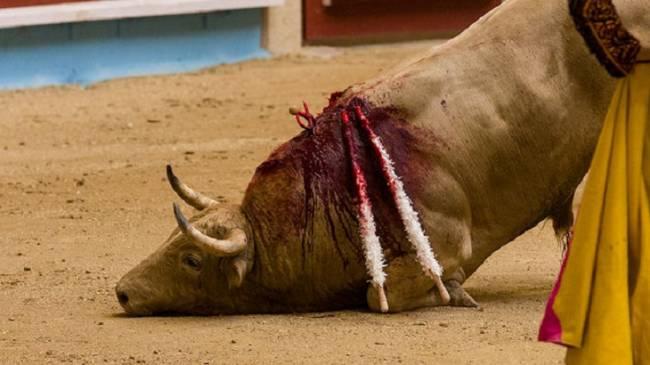 PACMA cuestiona la sentencia del Constitucional sobre la ley balear de toros
