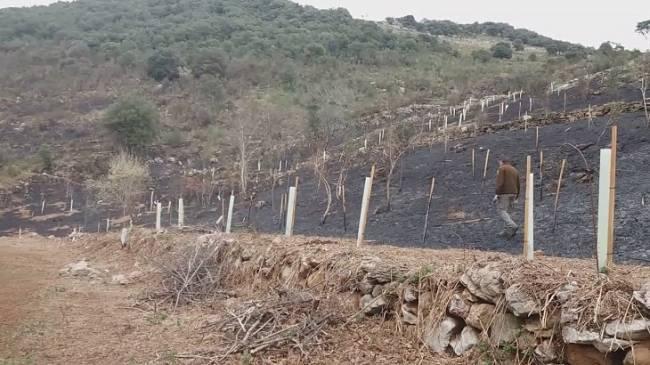 Reforestación de los Pozos de Valcaba
