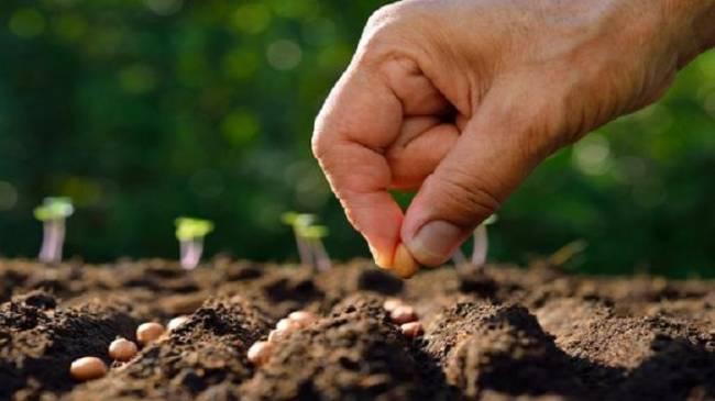 El presidente de Alemania se interesa por la fruta ecológica en Extremadura